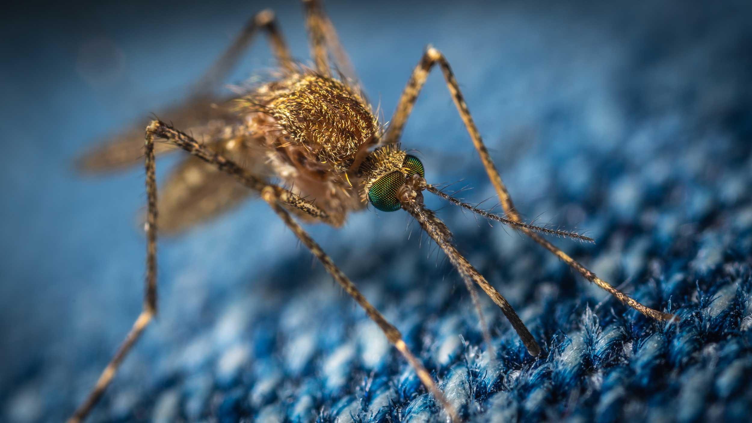 Blog Doctoome | Le moustique tigre est de retour dans 57 départements