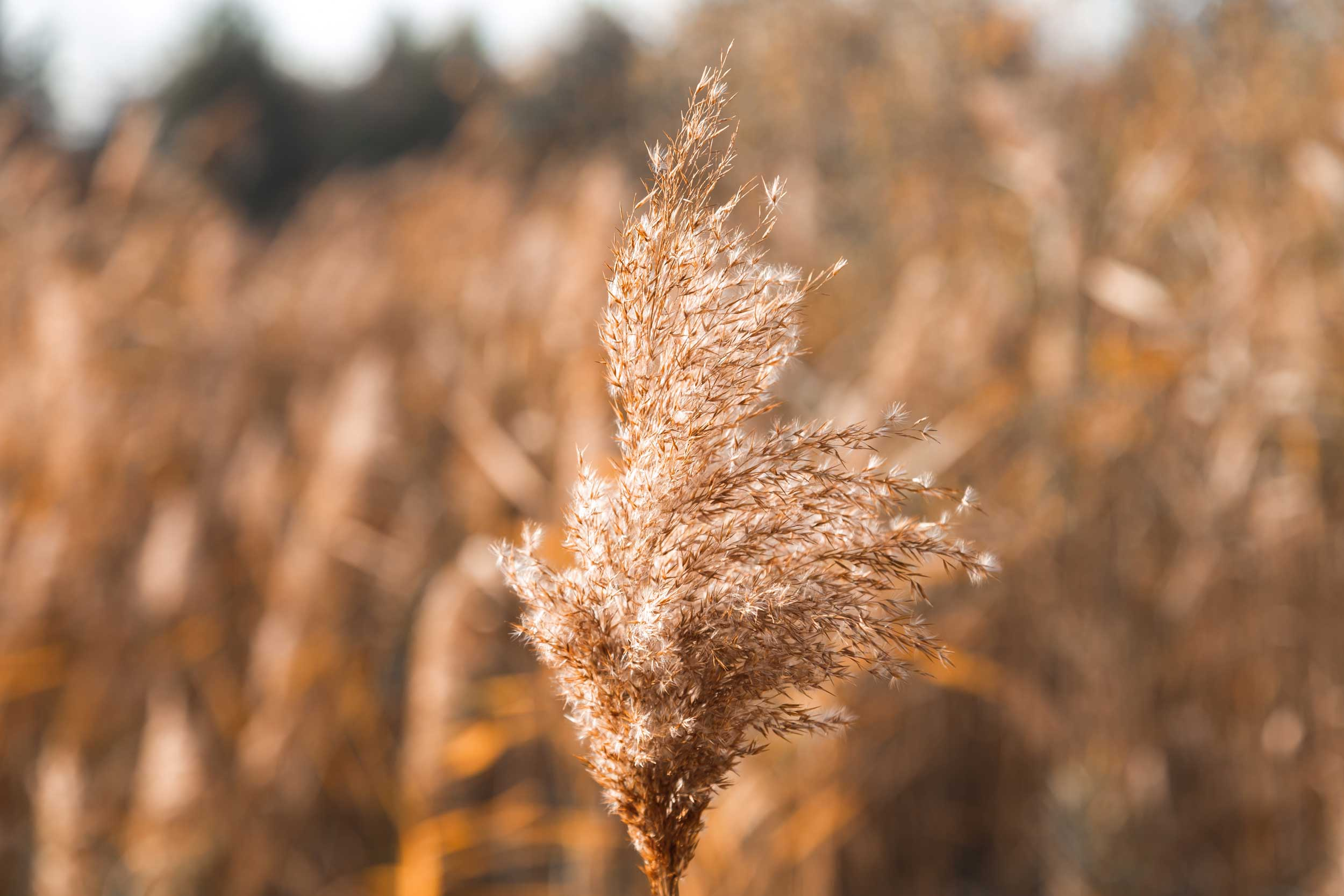 Blog Doctoome | Alerte allergies : forte concentration de pollens de graminées